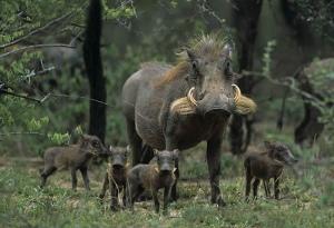 Madre con crías